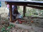 Děvčata vložila do krmelce jablíčka a chlebík.
